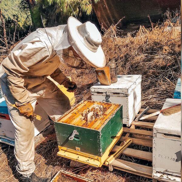 Imker mit Bienenstock Kukuvaja Feinkost